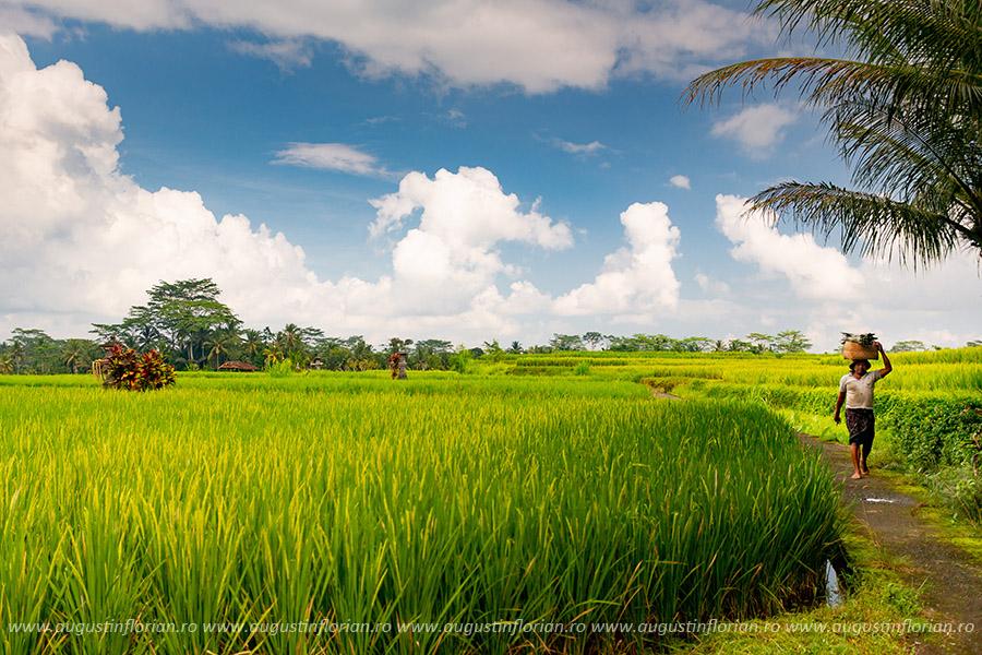Ubud și împrejurimi, Bali