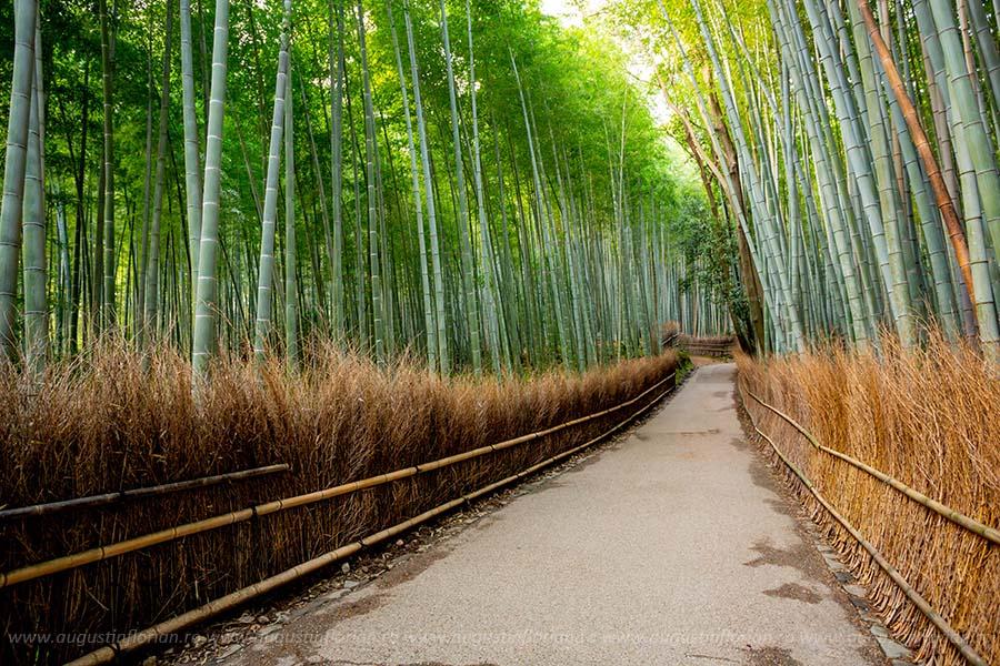 Arashiyama, Japonia