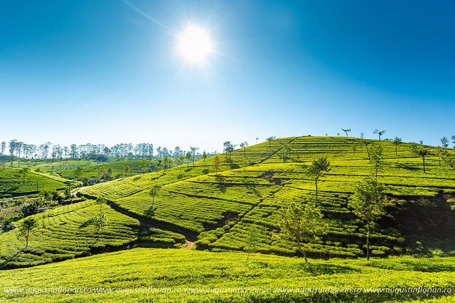 Ceaiurile Lipton din Haputale, Sri Lanka